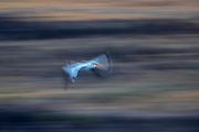 A long exposure captures the motion of an American white pelican (Pelecanus erythrorhynchos) flying over the Potholes Canal on its way to hunt in the Columbia National Wildlife Refuge in Grant County, Washington.