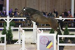 027 - Magic Pika<br /> Hengstenkeuring BWP - Azelhof - Koningshooikt 2015<br /> ©  Dirk Caremans
