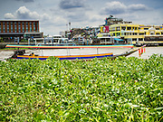 "26 AUGUST 2014 - BANGKOK, THAILAND:   A ""long tailed boat"" cuts along Water Hyacinth (Eichhornia Crassipes), an invasive species originally from the Amazon Basin in Brazil, on the Chao Phraya River in Bangkok.     PHOTO BY JACK KURTZ"