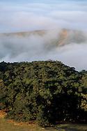 Coastal fog and rolling hills at sunrise, in the rural countryside near Cambria, San Luis Obispo County, California