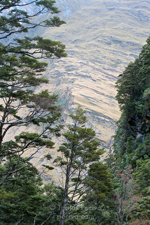 Mountainside framed by vegetation in the West Matukituki Valley, Mount Aspiring National Park, New Zealand.
