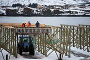 Workers preparing cod for drying on racks at Ramberg, Lofoten, Norway in February 2013.