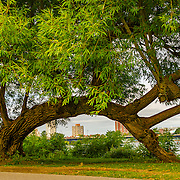 I've loved this tree along the Charles River in Boston for as long as I've been going to Boston.  In this shot, I have left the image as shot, aside from a few tweaks.  That's Cambridge in the background.