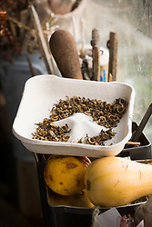 Calendula seeds collected on tray in shed at Glebe Cottage