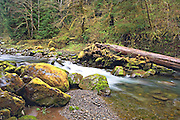 small waterfall on Owl Creek Hoh Rainforest Washington State