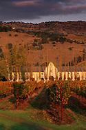 Sunset light over vineyards at Chimney Rock, Silverado Trail Napa County, California