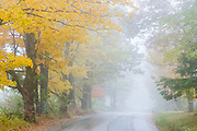 Rural road, maple trees and fog, October, Cheshire County, New Hampshire, USA