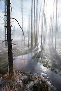 Dead trees, steam and frost in thermal area of Yellowstone National Park, Wyoming