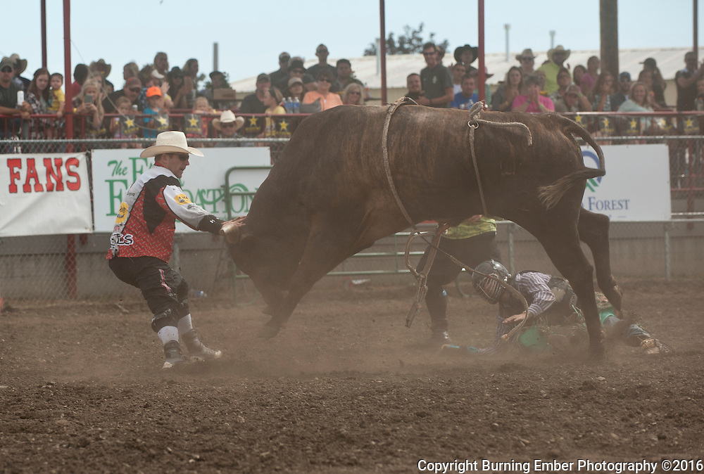 Nate Jestes pulls bucking bull Fall Out from Roscoe Jarboe at the 3rd perf in the Gem State Stampede Rodeo in Coeur D'Alene Idaho on 08/28/16.  Josh Homer photo.  Photo credit must be given on all uses.  www.burningemberphotography.com