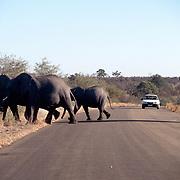 Krugerparken 2002 07 Syd Afrika<br /> Afrikansk elefant<br /> <br /> FOTO JOACHIM NYWALL KOD0708840825<br /> COPYRIGHT JOACHIMNYWALL:SE<br /> <br /> ****BETALBILD****<br />  <br /> Redovisas till: Joachim Nywall<br /> Strandgatan 30<br /> 461 31 Trollhättan<br />  Prislista: BLF, om ej annat avtalats