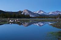 View towards Lembert Dome from Tuolumne meadows, Yosemite national park, California, USA