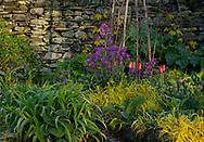 Chapelside Garden in spring.  Mungrisdale, Cumbria, UK