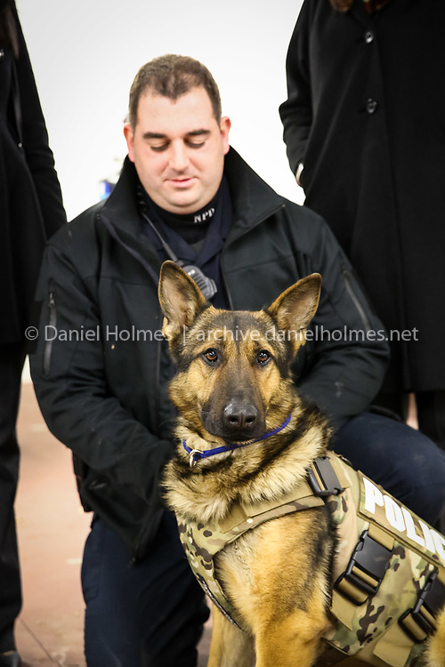 (1/6/15, NATICK, MA) Officer Mike Mabardy and K9, Axel, with a new protective vest at the Natick Police Station in Natick on Tuesday. The vest was donated by Vested Interest in K-9s with fundraising help by Essex Park rehabilitation and nursing center in Beverly. Daily News and Wicked Local Photo/Dan Holmes