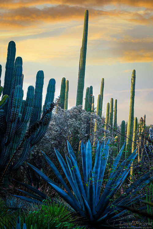 Variety of cactuses and aloes.