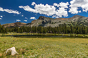 Grassy Meadow at Tioga Pass and Ellery Lake