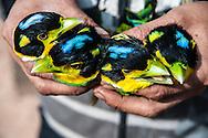 Birds being sold at a small market near Phongsali, Laos