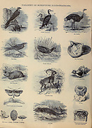 Gallery of Scripture Illustrations of Animals of the Bible from ' The Doré family Bible ' containing the Old and New Testaments, The Apocrypha Embellished with Fine Full-Page Engravings, Illustrations and the Dore Bible Gallery. Published in Philadelphia by William T. Amies in 1883