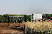 Israel, Golan Heights, Gamla, A vineyard of the Binyamina Winery
