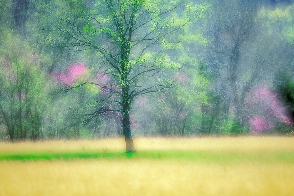 Backroad impressionism, spring, Missouri, USA
