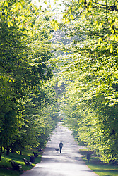 © Licensed to London News Pictures. 10/04/2014. London, UK People walk their dogs in bright sunshine at Greenwich Park in London today, 10 April 2014,The weather forecast is set to be brighter and warmer over the coming days.Photo credit : Stephen Simpson/LNP