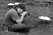 Shaggy parasol fungi (Chlorophyllum sp.) and admirers with the Surrey Wildlife Trust. Wisley Common, Surrey, UK.