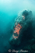 hot lava from Kilauea Volcano erupting underwater as pillow lava, offshore from Hawaii Volcanoes National Park, Puna, Hawaii ( the Big Island ), Hawaiian Islands, U.S.A. ( Central Pacific Ocean )