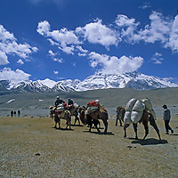 Kyrgiz nomads lead Bactrian camels carrying equipment for a trekking group under 24,757-foot Mustagh Ata in the Pamir Mountains of Xinjiang, China.