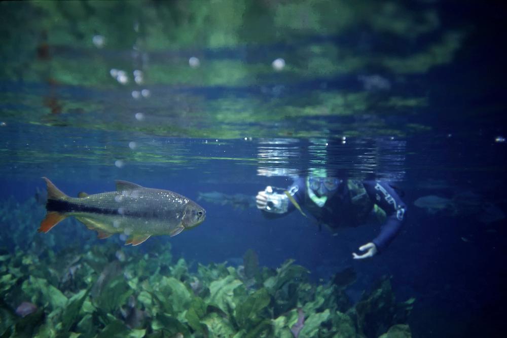 Bonito_MS, Brasil...Aquario natural de Bonito localizado na Reserva Ecologica Baia Bonita, Mato Grosso do Sul...The natural acquire in Bonito, located in the Baia Bonita Ecological Reserve Mato Grosso do Sul. ..Foto: JOAO MARCOS ROSA / NITRO.