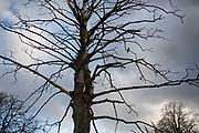 Crow silhouette in a tree in Highgate Park in Birmingham, United Kingdom.