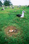Midway Island, N.W. Hawaiian Chain, Hawaii<br />