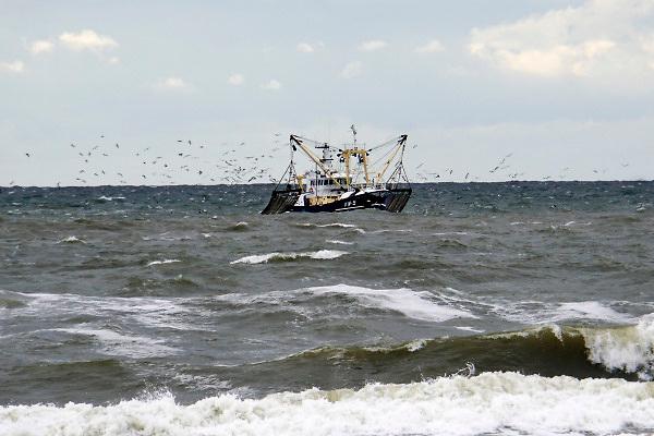 Nederland, Egmond aan zee, 27-8-2018 Een vissersschip uit Katwijk heeft de netten uitgehangen in het water . Meeuwen vliegen erbij om een graantje van de vangst mee te pikken .Foto: Flip Franssen