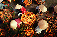 """Washing carrots in a stream. Dalat, Vietnam<br /> Available as Fine Art Print in the following sizes:<br /> 08""""x12""""US$   100.00<br /> 10""""x15""""US$ 150.00<br /> 12""""x18""""US$ 200.00<br /> 16""""x24""""US$ 300.00<br /> 20""""x30""""US$ 500.00"""