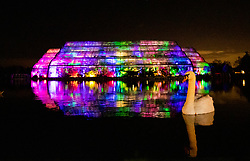 © Licensed to London News Pictures. 30/11/2018. London, UK. A swan is reflected in the lake in front of the illuminated Glass House at RHS Wisley Gardens. Trees and plants have been illuminated at Royal Horticulture Society Wisley Gardens for the Christmas Glow seasonal event. Hundreds of different lights can be seen when following the trail throughout the gardens opening 1 December 2018 2 January 2019. Photo credit: Peter Macdiarmid/LNP
