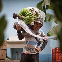 Larry Rivera, organic Fairtrade banana worker at Valle de Chira in Querecotillo.