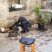 the many cats of Istanbul are well fed.