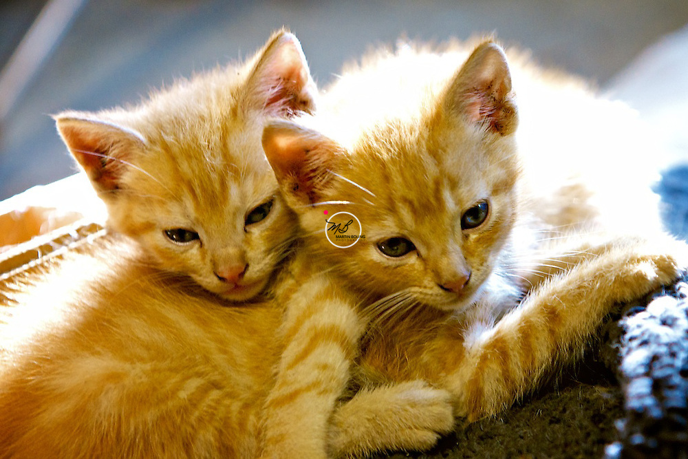 Kittens Brothers
