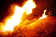 Flame from the fire he has just lit chases a Vista Grande Hotshot firefighter uphill to the safe zone during a night burning operation, an attempt to cut off the main fire, at the Station Fire near Los Angeles.