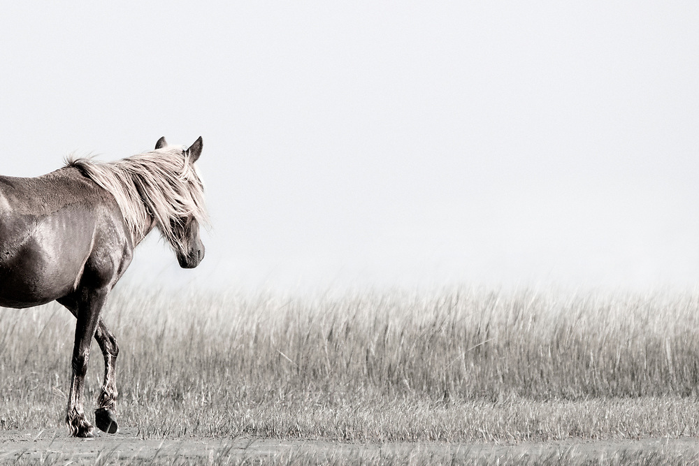 """""""To dare is to lose one's footing  momentarily. To not dare is to lose oneself"""" ~ Soren Kiekergard<br /> <br /> Tracie Spence's fine art photography series of The Spanish Wild Mustangs."""