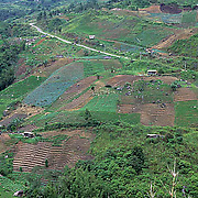 Terraced gardens of agri- culture; former rain forest. Malaysia.