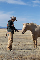 portrait of a very good looking cowboy in New Mexico putting his hand out to a wild white horse