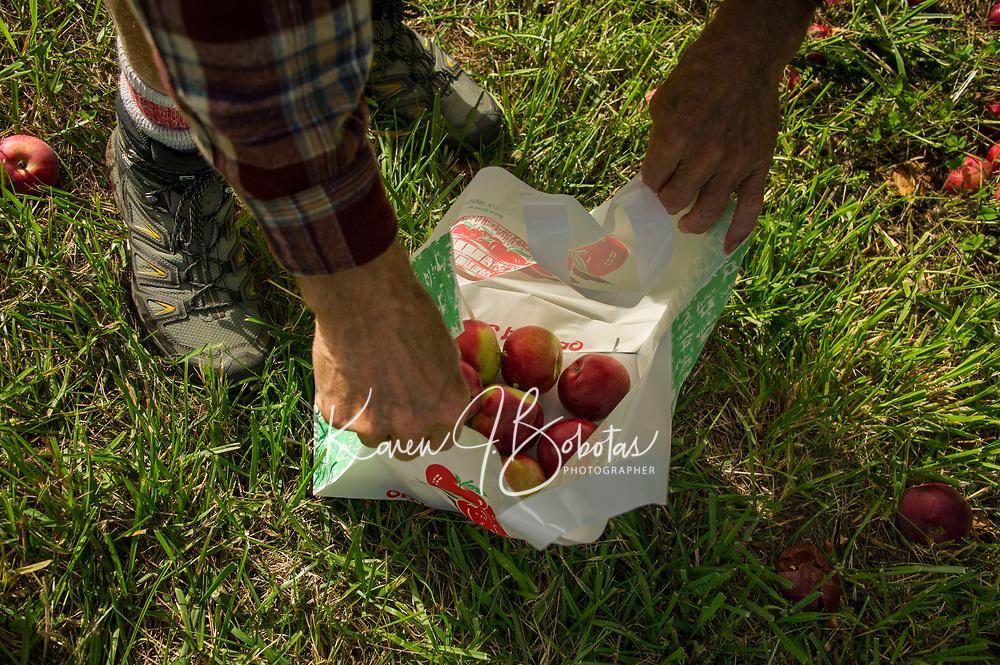 Stone Brook Farm Apple Season.  Karen Bobotas for the Laconia Daily Sun