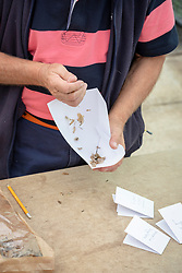 Collecting and storing dahlia seed - making envelope by folding A4 paper