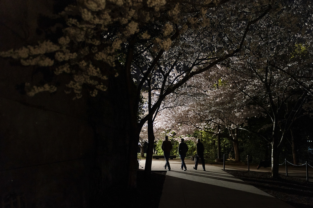Three men walk into the Franklin Delano Roosevelt Memorial amidst cherry blossoms in full bloom along Tidal Basin in Washington, D.C., on Monday, April 01, 2019.