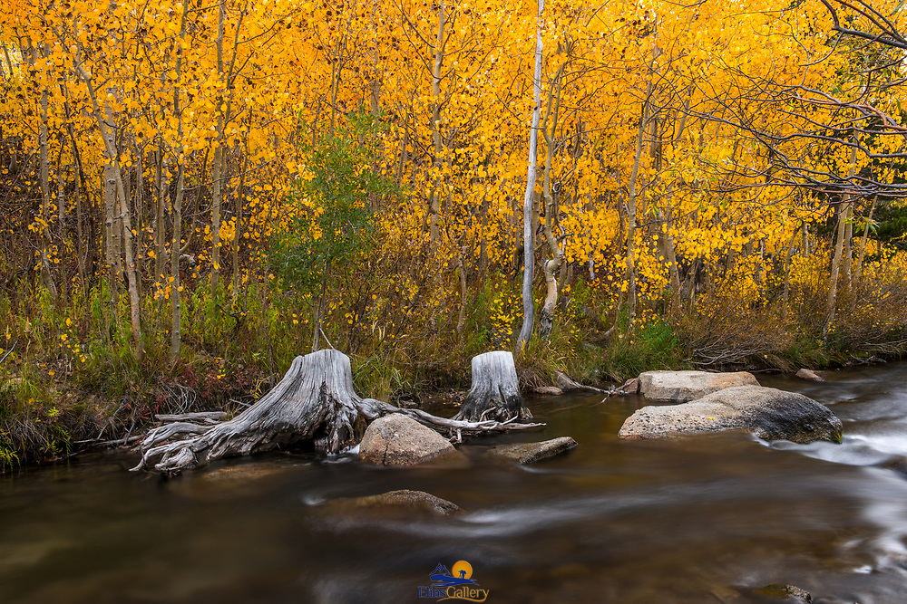 Fall colors and river. Eastern Sierras near Bishop, California.