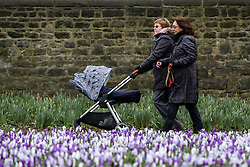 © Licensed to London News Pictures. 01/03/2017. Leeds, UK. Two women walk by the colourful crocuses on the first day of spring at Kirkstall Abbey in Leeds, West Yorkshire. Despite spring being on the way weather experts are predicting more cold weather and snow later this week. Photo credit : Ian Hinchliffe/LNP