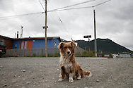 Puerto Williams  Puerto Williams - Chile   /// Puerto williams la ville la plus australe de la planete  Puerto Williams - Chili  /// CHILE001