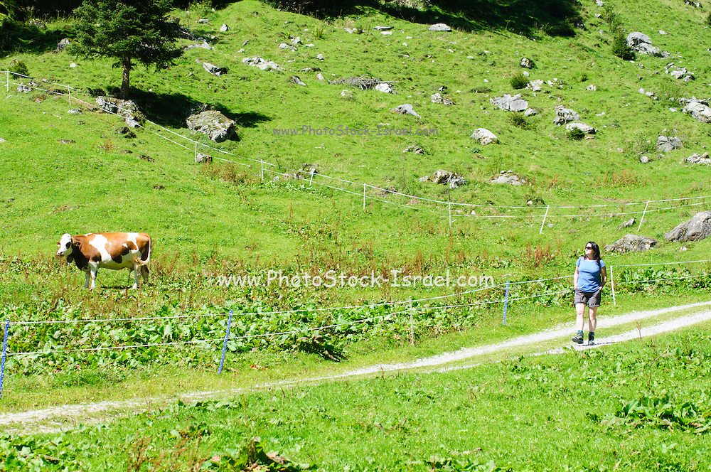 Female hiker photographed in Zillertal, Tirol, Austria
