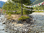 Prayer flags hanging from pine trees and the Haa Chhu river in Yangthang village, Haa Valley, Western Bhutan. Prayer flags are ubiquitous in Bhutan and come in five colours - blue, green, red, yellow and white - symbolising the elements of water, wood, fire, earth and iron. The prayer for the flag is carved into wooden blocks and then printed on the cloth in repeating patterns.