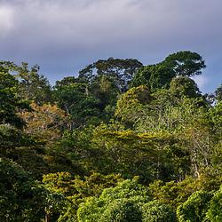 """""""Floresta (paisagem) fotografado em Linhares, Espírito Santo -  Sudeste do Brasil. Bioma Mata Atlântica. Registro feito em 2014.<br /> <br /> <br /> <br /> ENGLISH: Forest Landscape photographed in Linhares, Espírito Santo - Southeast of Brazil. Atlantic Forest Biome. Picture made in 2014."""""""