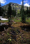 Mount Robinson Roadless Area in summer. Purcell Mountain in the Kootenai National Forest, northwest Montana